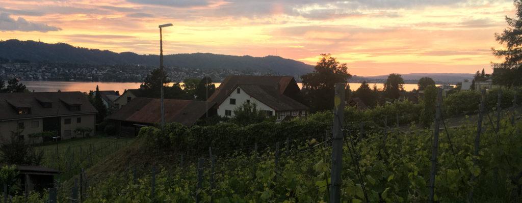 Blick über den Zürichsee von Weingut Diederik Küsnacht aus